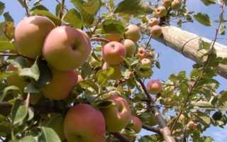 Удобрения для фруктовых деревьев осенью